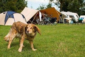 honden op camping