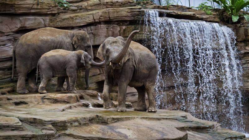Wildlands Adventure Zoo-Arrangement - Wildlands Adventure Zoo Arrangement